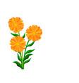 orange flowers vector image vector image