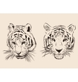 Original artwork tiger with dark stripes isolated vector image vector image
