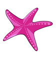 pink starfish on white background vector image