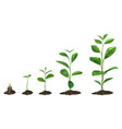 realistic plant growth stages young seed growing vector image
