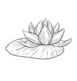 water flower isolated sketch lotus bud with leaf vector image