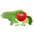 Zucchini tomato broccoli arugula basil vector image vector image