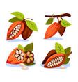 cocoa beans cartoon style vector image vector image