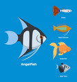 Exotic tropical aquarium fish different colors vector image