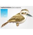Laughing Kookaburra vector image