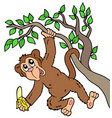 monkey with banana on tree vector image