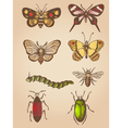 set of hand drawn vintage butterfly and insects vector image
