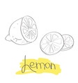 Cut lemon slices vector image