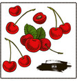 cherry set vector image