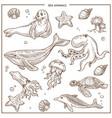sea and ocean animals or fish sketch vector image