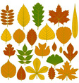 Set of tree leaves vector image