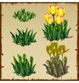 Stages of growth tulips planting and withering vector image