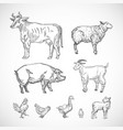 hand drawn domestic animals set a collection of