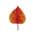 hand drawn watercolor leaf isolated on white vector image vector image