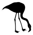silhouette bird flamingo on a white background vector image