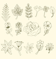 floral set Graphic collection with leaves and flow vector image vector image