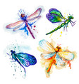 flying watercolor dragonflies hand made set vector image