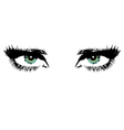 womens eyes vector image vector image