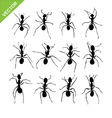 Ant silhouettes vector image