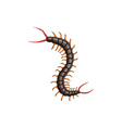centipede icon pest control insects disinsection vector image vector image