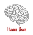 Isolated human brain engraving sketch vector image