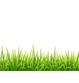 Green isolated grass on white background