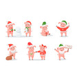 pigs in hats and sweaters new year and christmas vector image
