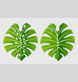 two patterns of green leaves vector image vector image