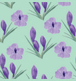 beautiful orchid violet and crocuses flowers vector image vector image