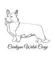cardigan welsh corgi dog coloring vector image vector image