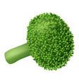 farm broccoli icon realistic style vector image vector image