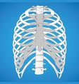 first aid anatomy human rib cage vector image vector image