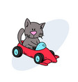 funny cat riding sports car vector image