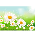 grass and daisies vector image vector image