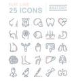 set flat line icons anatomy
