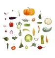 Vegetables sesign set vector image