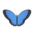 blue tropical butterfly beautiful colorful flying vector image vector image