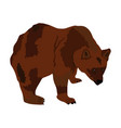 bear isolated on white background grizzly symbol vector image vector image
