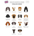 dogs by country of origin english dog breeds vector image vector image
