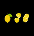 flat fresh lemon with leaf vector image vector image