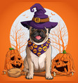pug dog in halloween disguise sitting vector image vector image