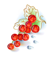 Red currant bunch with leaf and dew drops vector image