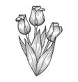 tulip flowers sketch engraving vector image