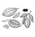 cocoa superfood drawing setorganic healthy vector image vector image
