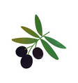 colored isolated icon of branch with black olives vector image vector image