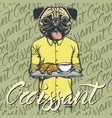 pug dog with croissant and coffee vector image