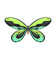 tropical butterfly green colors beautiful vector image vector image