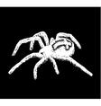 cross spider Araneus vector image