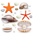 realistic seashell and starfish icon set vector image