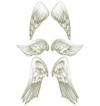 Angel wings on white vector image vector image